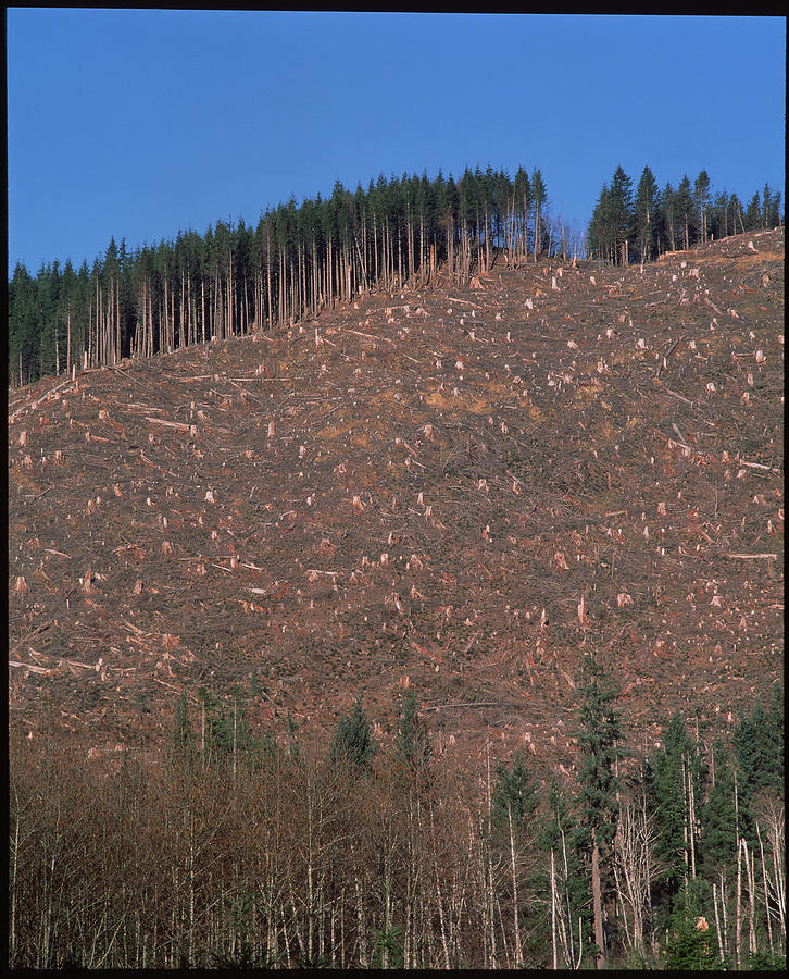 tree-stumps-on-clear-cut-hillside